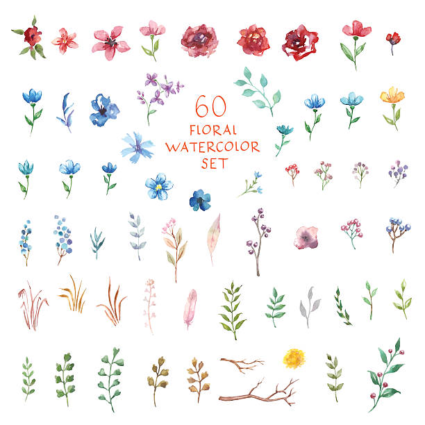 Floral watercolor set. Different vector elements. Floral decor set. 60 different vector and decor elements for design. Isolated. single flower stock illustrations