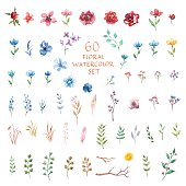 Floral watercolor set. Different vector elements.