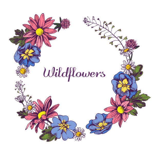 floral wreath of wildflowers hand drawn vector illustation - wildflowers stock illustrations, clip art, cartoons, & icons