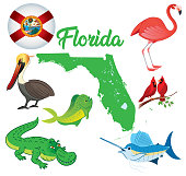 Vector Florida Animals