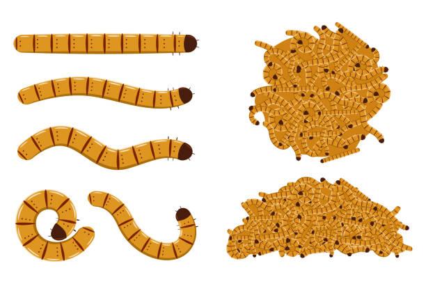 stockillustraties, clipart, cartoons en iconen met bloem wormen vector tekenfilm reeks geïsoleerd op een witte achtergrond. - larve