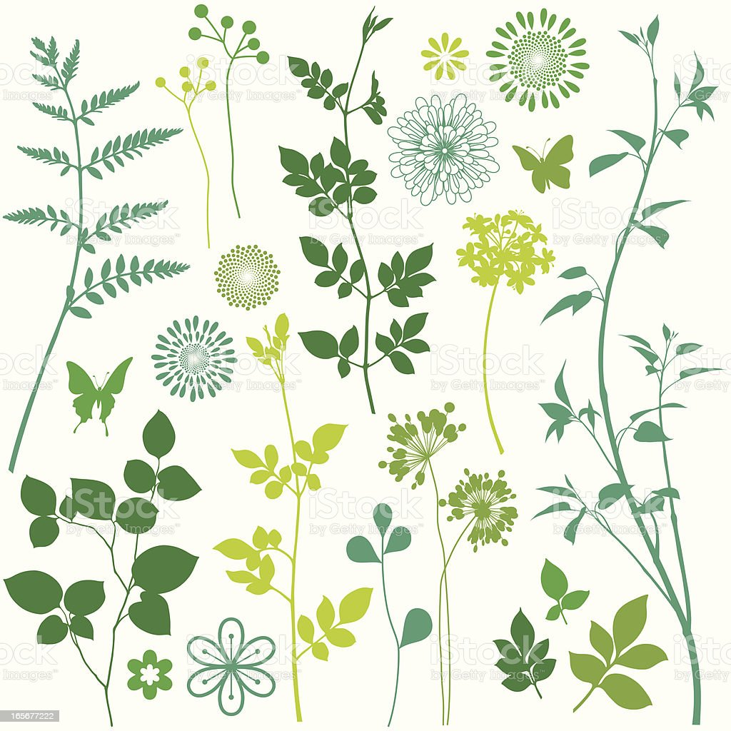 Flower and Leaf Elements vector art illustration