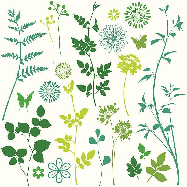 illustrazioni stock, clip art, cartoni animati e icone di tendenza di fiore e foglia elementi - farfalla ramo