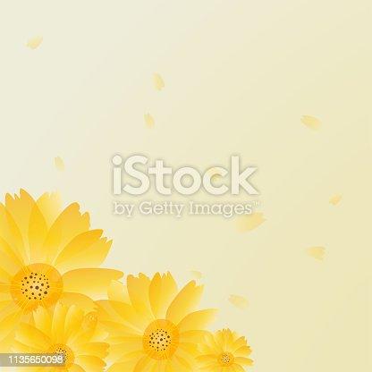 Flower Background, Chrysanthemum, Petals.