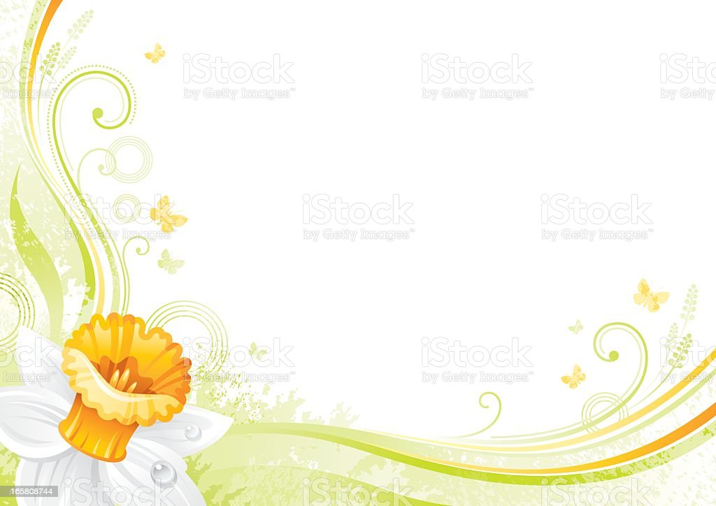 Flower background with copyspace: white Daffodil royalty-free stock vector art