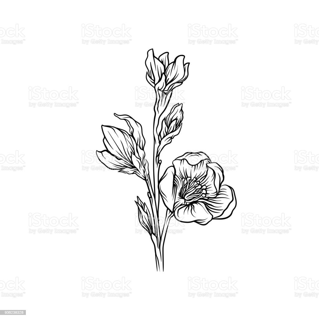 Flower Black And White Hand Drawn Floral Design Element Vector