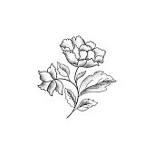 Flower bouquet. Floral sketch engraving background