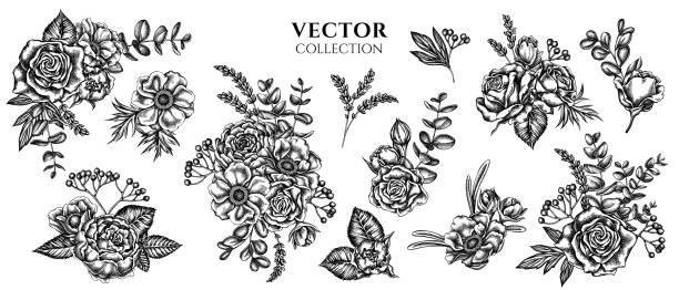 bildbanksillustrationer, clip art samt tecknat material och ikoner med blombukett av svarta och vita rosor, anemon, eukalyptus, lavendel, pion, viburnum - lavender engraving