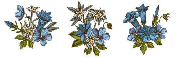 stockillustraties, clipart, cartoons en iconen met bloem boeket van gekleurde edelweiss, weide geranium, gentiana - gentiaan