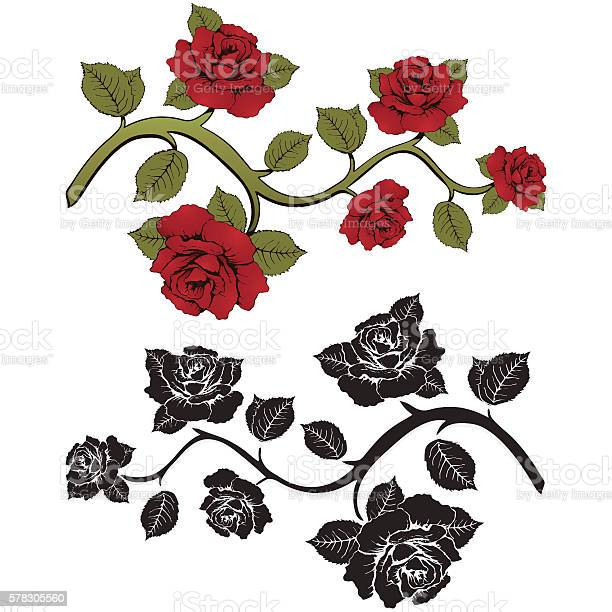 Flower branch roses set of red and black roses branches vector id578305560?b=1&k=6&m=578305560&s=612x612&h=qk7muacswuhmrhv70alwnbvabde hbzvh0jhiuszf y=
