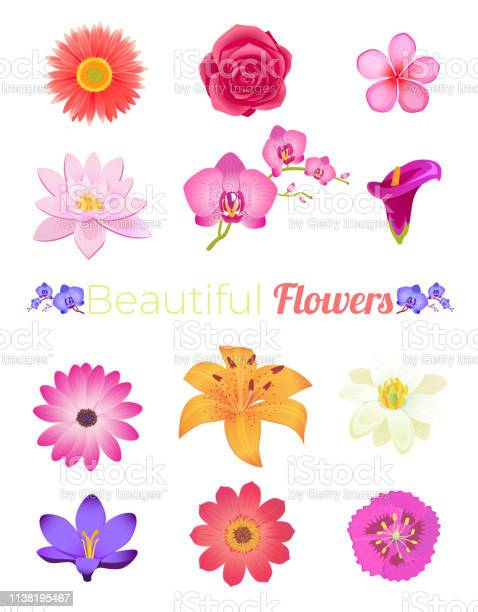 Flower color set design flat isolated vector id1138195467?b=1&k=6&m=1138195467&s=612x612&h=fgon1cuicleqnyaompgke2zwxlvzgchchdztexea22a=