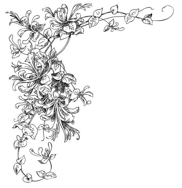 Flower Corner Floral corner ornament. Hand drawn engraving illustration. honeysuckle stock illustrations
