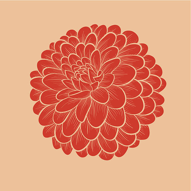 stockillustraties, clipart, cartoons en iconen met flower dahlia drawn in graphical style contours and lines - dahlia