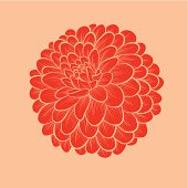 flower Dahlia drawn in graphical style contours and lines