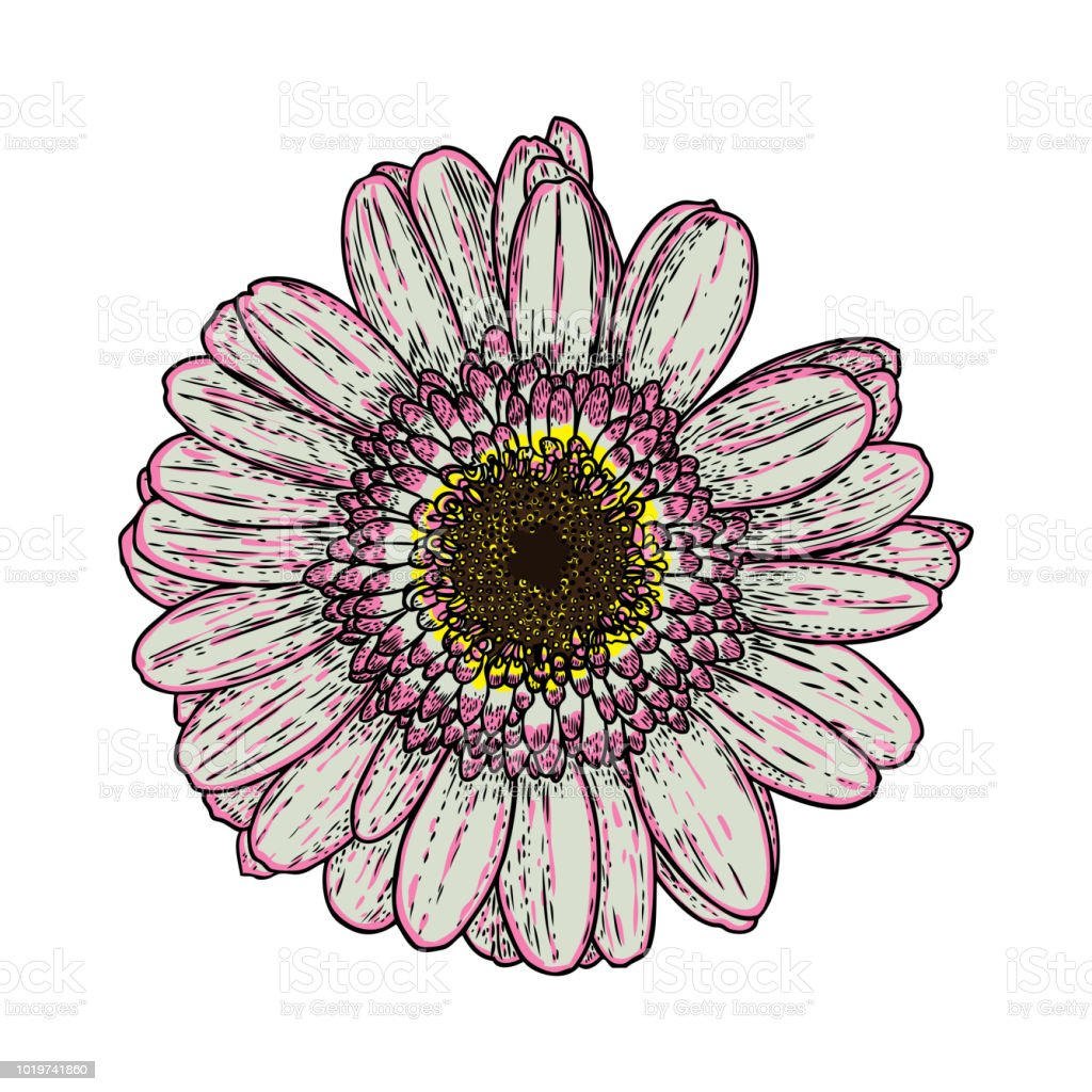 Flower Drawings Daisy Line Art Flowers Hand Drawn Isolated On White