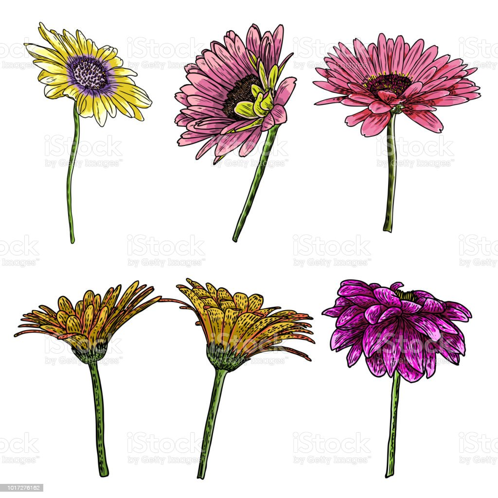 Flower Drawings Daisy Line Art Flowers Set Hand Drawn Isolated On