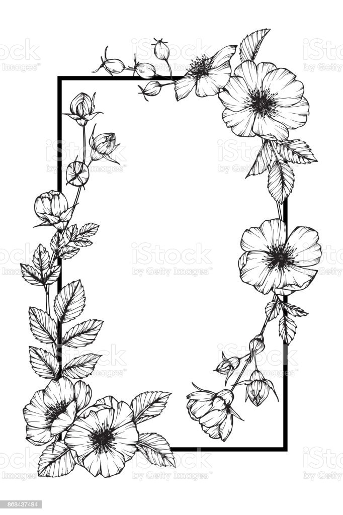Flower Frame Of Rose Floral Drawing And Sketch With Black And White