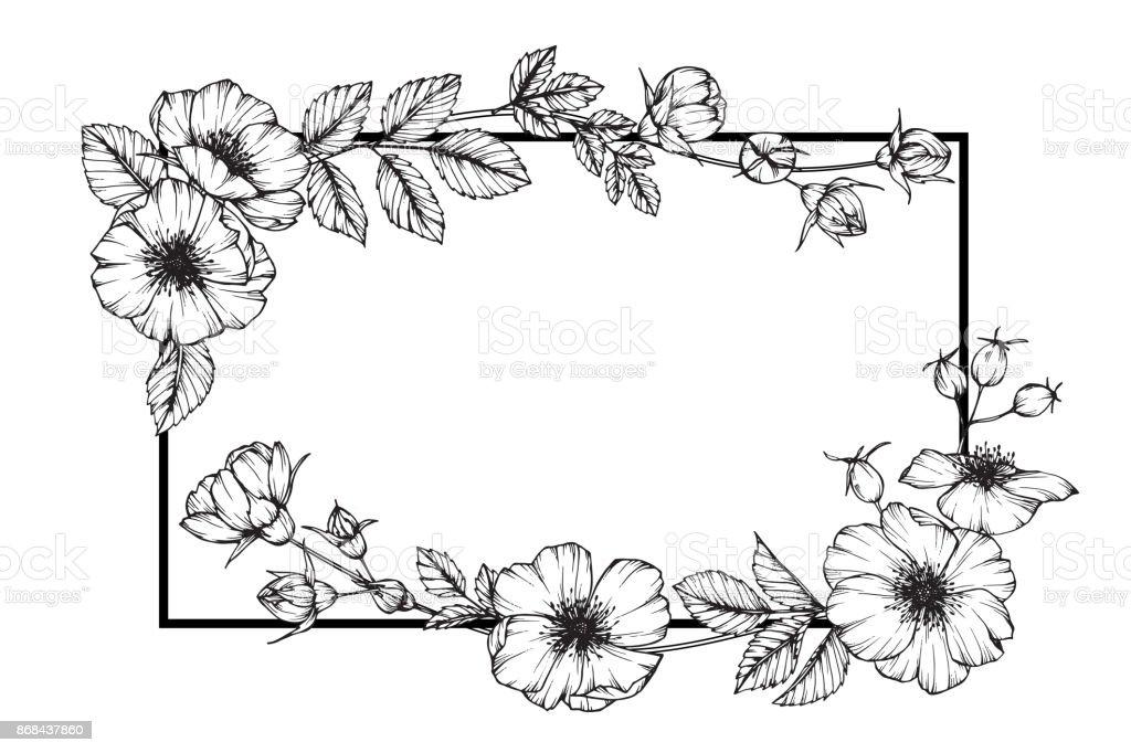 Cadre De Fleur De Rose Floral Dessin Et Croquis Avec Trait