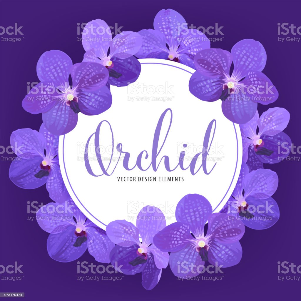 Flower Frame Of Vanda Orchid Flower With White Background Template