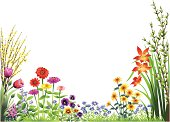 Forsythia, tulips, zinnias, pansies, daisies, day lilies, asters and sweet william in the garden.