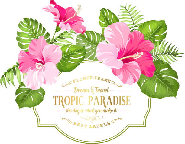 Best Hibiscus Flower Illustrations, Royalty-Free Vector Graphics