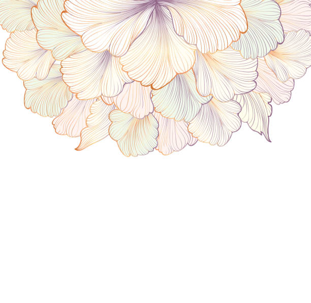 ilustraciones, imágenes clip art, dibujos animados e iconos de stock de flower gentle white background. floral frame. flourish greeting card. - marcos florales