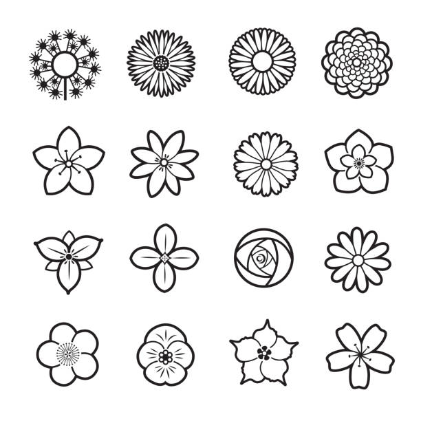 Flower icon collection Flower line icon collection, set of 16 editable filled, Simple clearly defined shapes in one color. trillium stock illustrations