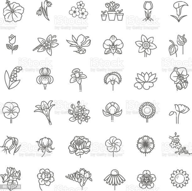 Fleur Icon Set Illustration Vectorielle Vecteurs libres de droits et plus d'images vectorielles de Anthurium