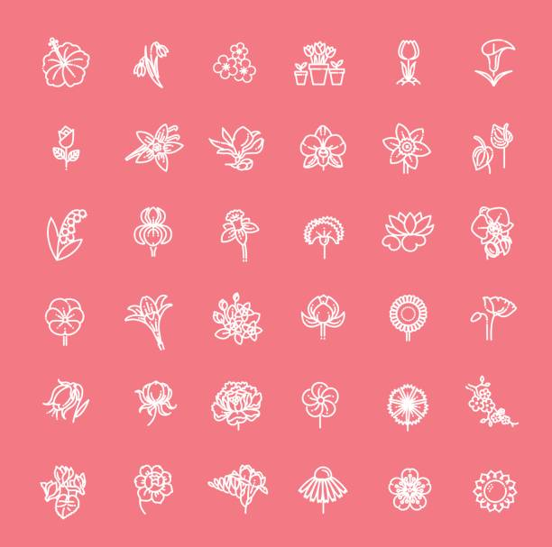 blume-icon-set - vektor-illustration - alpenveilchen stock-grafiken, -clipart, -cartoons und -symbole