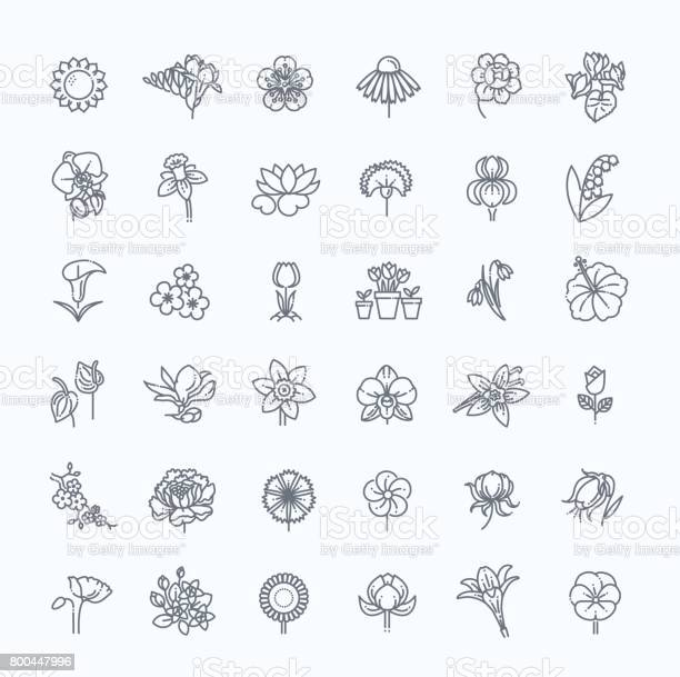 Flower icon set vector illustration vector id800447996?b=1&k=6&m=800447996&s=612x612&h=iqug4a3b5de7sfjuenhmfc2ov oxfojo5qza07xqvoo=