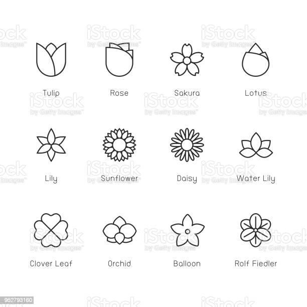 Flower icon thin line series vector id952793160?b=1&k=6&m=952793160&s=612x612&h=y 2gas3rvydmmzz khq6nfohvq6jkk8szwic4itbfzu=