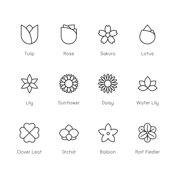 flower icon - thin line series - sunflower stock illustrations