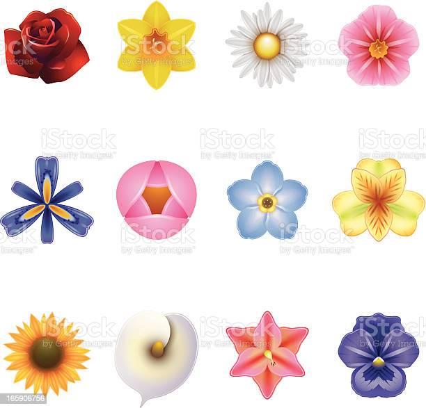 Flower icons vector id165906756?b=1&k=6&m=165906756&s=612x612&h=pb61nyv4psnsmyoz7gk1kla91sl7nvsjpydt3ksvswo=