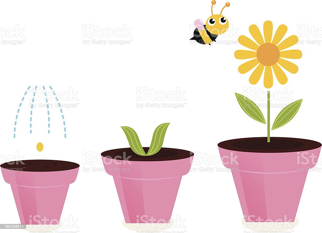 Flower in pots growth stages isolated on white vector art illustration