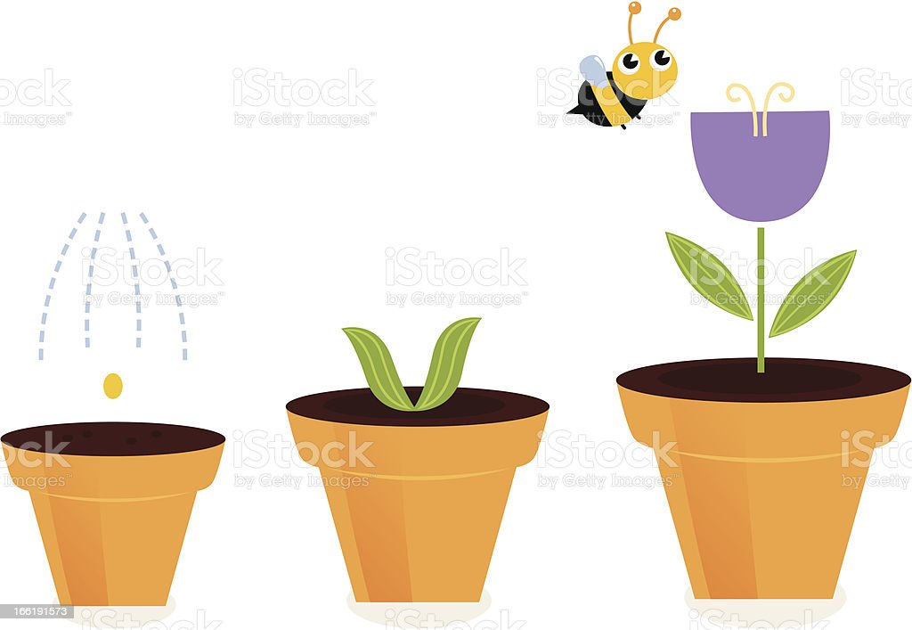 Flower in pots growth stages isolated on white ( tulip ) royalty-free stock vector art