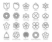 Flower Light Line Icons Vector EPS File.