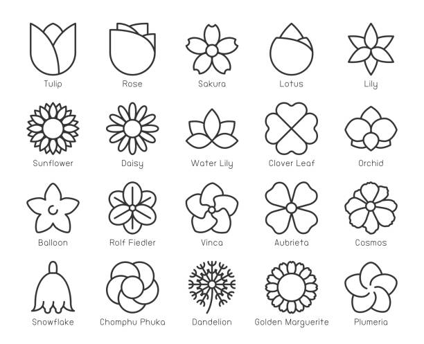 Flower - Light Line Icons Flower Light Line Icons Vector EPS File. water lily stock illustrations