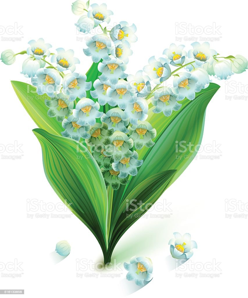 Flower lily valley bouquet lily of valley stock vector art more flower lily valley bouquet lily of valley royalty free flower lily valley bouquet lily izmirmasajfo