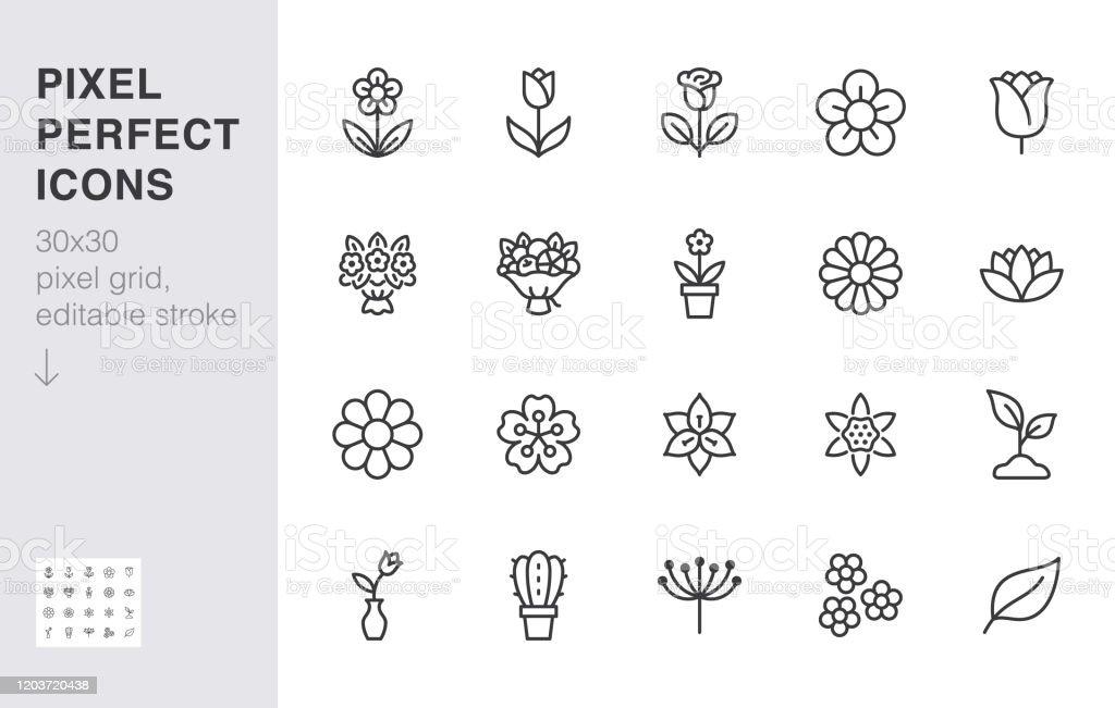 De pictogramreeks van de bloemlijn. Nam toe, tulp in vaas, fruitboeket, de lentebloesem, cactus minimale vectorillustratie Eenvoudige overzichtstekens voor de toepassing van de bloemenlevering. 30x30 Pixel Perfect. Bewerkbare lijn - Royalty-free Abstract vectorkunst