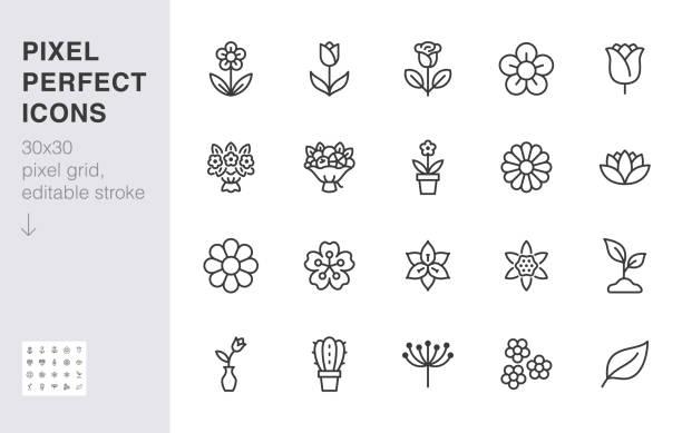 花線圖示集。玫瑰,鬱金香花瓶,水果花束,春花,仙人掌最小向量插圖簡單輪廓標誌為鮮花交付應用。30x30 圖元完美。可編輯描邊 - 大自然 幅插畫檔、美工圖案、卡通及圖標