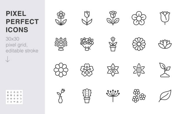 Flower line icon set. Rose, tulip in vase, fruit bouquet, spring blossom, cactus minimal vector illustration Simple outline signs for flowers delivery application. 30x30 Pixel Perfect. Editable Stroke Flower line icon set. Rose, tulip in vase, fruit bouquet, spring blossom, cactus minimal vector illustration Simple outline signs for flowers delivery application. 30x30 Pixel Perfect Editable Strokes rose flower stock illustrations