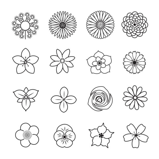 Flower line icon set Flower line icon set, Set of 16 editable filled, Simple clearly defined shapes in one color. trillium stock illustrations
