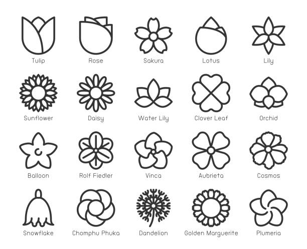 Flower - Line Icons Flower Line Icons Vector EPS File. frangipani stock illustrations