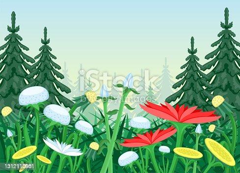istock Flower meadow in coniferous forest. 1312110981