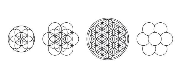 Flower of Life, Seed and Egg of Life vector art illustration