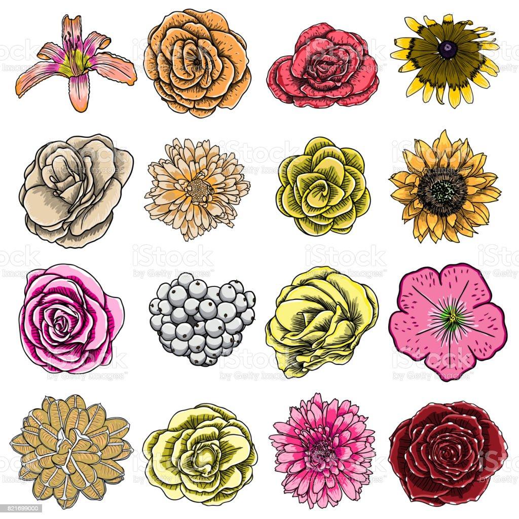 Fleur Dété Défini Collection Dans Des Couleurs Lumineuses Et De Style De Dessin Des Fleurs Tropicales Exotiques Et Domestiques Vector Vecteurs Libres