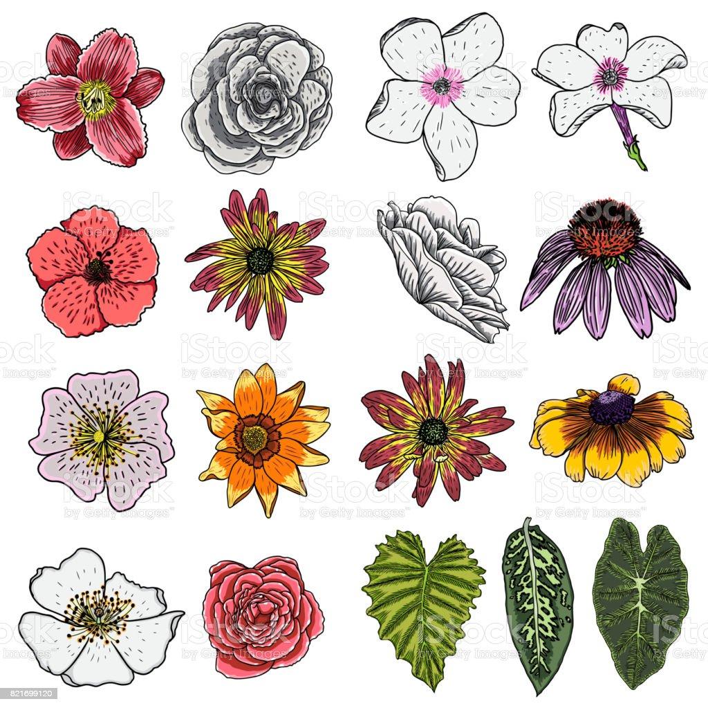 Ilustracion De Set De Flores De Verano Tropical Exotica Y Domestica