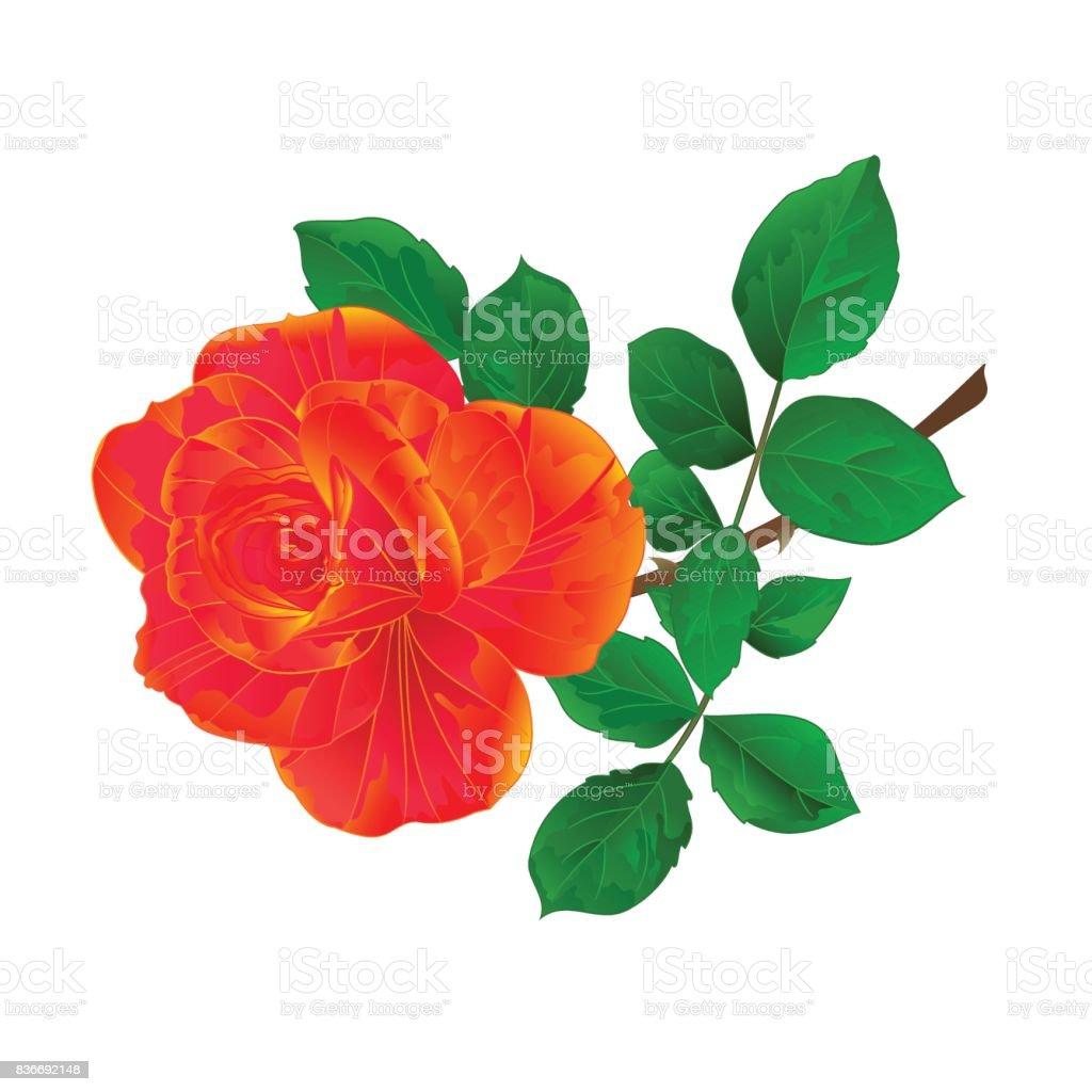 Flor Naranja Rosa Y Hojas Vintage En Una Ilustración De Vector De ...