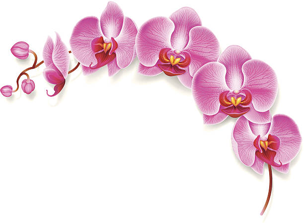 Flower orchid. Eps10. Image contain transparency and various blending modes. orchid stock illustrations