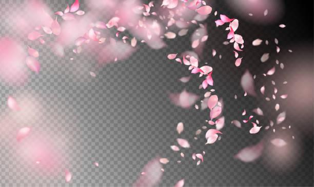 바람에 꽃잎 - 꽃잎 stock illustrations
